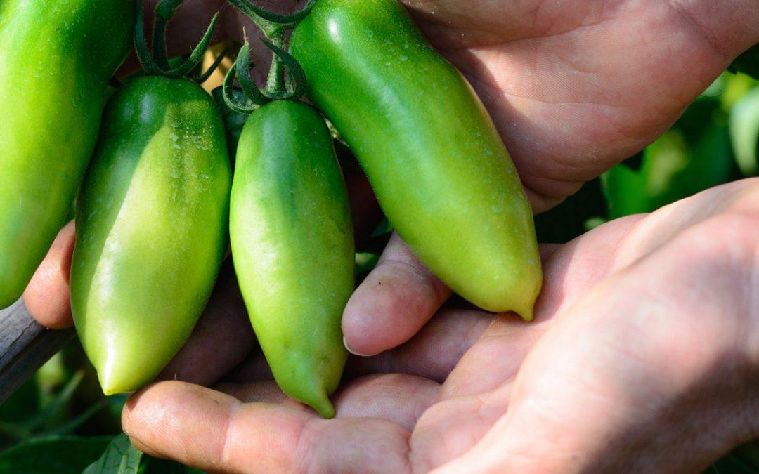 Substancje humusowe – Wyzwanie chemików 21 wieku